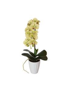 Designer Plants Artificial 40cm Butterfly Orchid Cream
