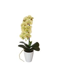 Designer Plants Artificial 40cm Butterfly Orchid Cream