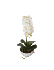 Designer Plants Artificial 46cm Butterfly Orchid White