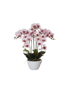 Designer Plants Artificial 66cm Multi Butterfly Orchid Pink