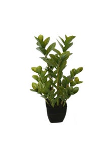 Designer Plants Artificial 72cm Potted Multi Stem Zanzibar