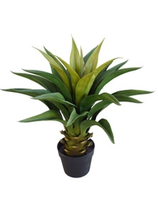 Designer Plants Artificial Agave 60cm Plant