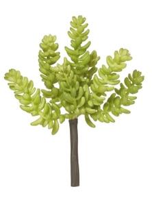 Rogue Sedum Sand Flower Green 10x10x17cm