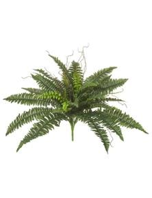 Rogue Wild Boston Fern Green 76x76x50cm