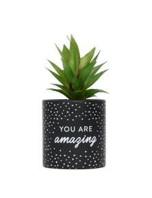 Splosh Amazing Pot Plant