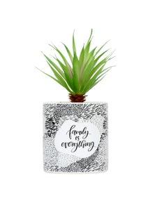 Splosh Family Pot Plant