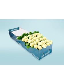 Mr Roses 12 long Stemmed White Cream Roses