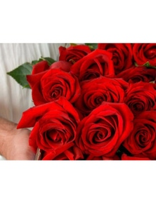 Mr Roses 20 Red Roses