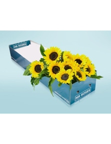 Mr Roses 20 Sunflowers