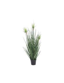 Grass In Plastic Pot